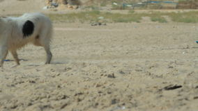 Dogs on the beach stock video footage