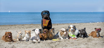 Dogs on beach stock photography