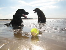 Dogs beach sun. Dogs Norfolk beach with ball sand and sun. UK british Stock Images