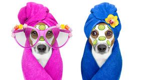 Dogs with a beauty mask wellness spa stock images