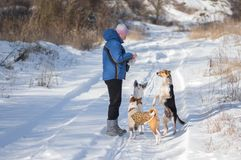 Dogs begging master to give them some food while play outdoor at winter season Stock Images