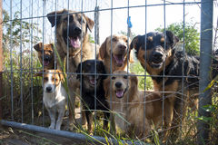 Dogs behind fence in shelter Stock Photo