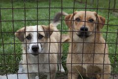 Dogs behind a fence Royalty Free Stock Photos