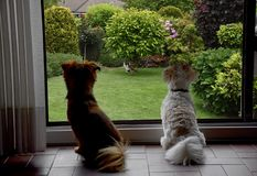Dogs behind a window observing a cat