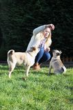 Dogs being trained by owner stock photo