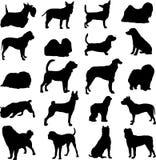 dogs berömdt Arkivbild