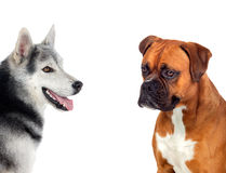 Dogs. The best friend Royalty Free Stock Photo