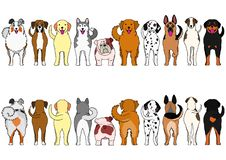Dogs breed border set with colors. From front view and rear view royalty free illustration
