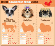 Dogs breed  infographics types of dog breeds from China. Royalty Free Stock Photography