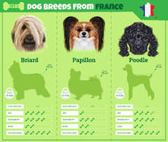 Dogs breed  infographics types of dog breeds from France Royalty Free Stock Photo