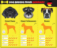 Dogs breed  infographics types of dog breeds from Germany. Stock Photography