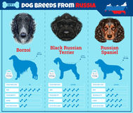 Dogs breed  infographics types of dog breeds from Russia. Stock Photography