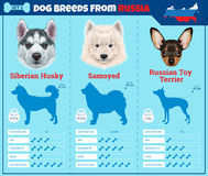 Dogs breed  infographics types of dog breeds from Russia. Royalty Free Stock Photos