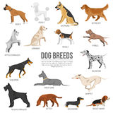 Dogs breed set Royalty Free Stock Images