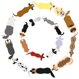 Dogs breed top view circle set. Set of Various breeds of dogs round frame from high angle view on white royalty free illustration