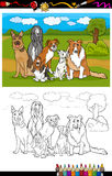 Dogs breeds cartoon for coloring book Stock Photo
