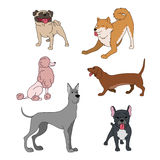 Dogs breeds cartoon set great dane, french bulldog, poodle, husky, dachshund pug on white vector collection Royalty Free Stock Photo