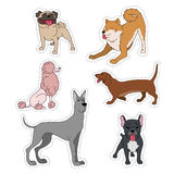 Dogs breeds cartoon stickers set great dane, french bulldog, poodle, husky, dachshund, pug on white vector collection. Vector illustration isolated on white Royalty Free Stock Image