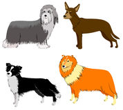 Dogs breeds. Cute dogs breeds set (collie, border collie, bearded collie, sheltie Royalty Free Stock Photography
