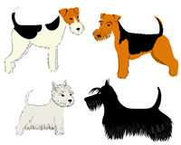 Dogs breeds Stock Photo