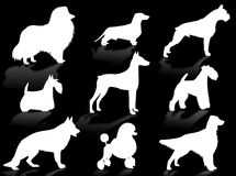 Dogs breeds silhouette. Dogs silhouette to represent different dog breeds Stock Photo