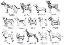 Dogs breeds vector set. Royalty Free Stock Photography
