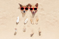 Dogs buried in sand Stock Image