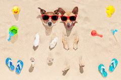 Dogs buried in sand Stock Photography