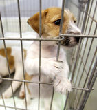 Dogs in a cage Stock Photo