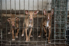 Dogs in a cage Royalty Free Stock Images