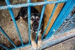 Cage for dogs in animal shelter. Dogs in the cage in animal shelter royalty free stock images