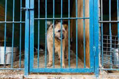Cage for dogs in animal shelter. Dogs in the cage in animal shelter stock photos