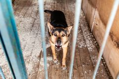 Cage with dogs in animal shelter. Dogs in the cage in animal shelter royalty free stock photography
