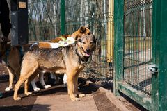 Cage for dogs in animal shelter. Dogs in the cage in animal shelter royalty free stock photo