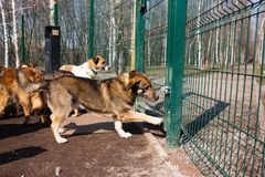 Cage for dogs in animal shelter. Dogs in the cage in animal shelter royalty free stock photography