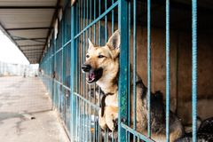 Cage with dogs in animal shelter. Dogs in the cage in animal shelter royalty free stock photo