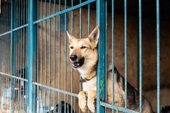 Cage with dogs in animal shelter. Dogs in the cage in animal shelter royalty free stock images