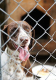 Dogs in a cage. With his tongue hanging out Stock Photography