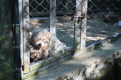 Dogs in a cage. Royalty Free Stock Photos