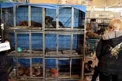 Dogs in cages for sale at a market in Azerbaijan Stock Photos