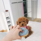 Dogs can`t eat sweets stock images