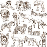 Dogs (Canidae) Royalty Free Stock Photo