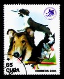 Dogs (Canis lupus familiaris), serie, circa 2001. MOSCOW, RUSSIA - MARCH 28, 2018: A stamp printed in Cuba shows Dogs (Canis lupus familiaris), serie, circa 2001 royalty free stock photography