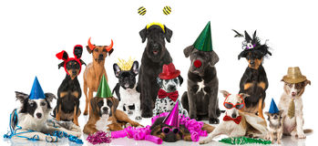 Dogs carnival Stock Photos