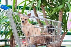 Dogs In The Cart. Two dogs in the market cart Stock Photo