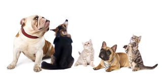 Dogs and  cat Royalty Free Stock Photo
