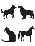 Dogs cat and horse royalty free stock photo