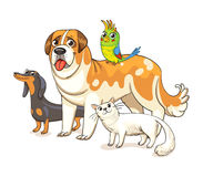 Dogs, a cat and a parrot standing together Royalty Free Stock Image