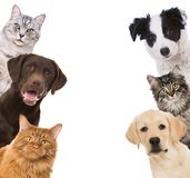 Dogs and cat see sideways in a window royalty free stock images