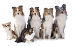 Dogs and cat Stock Images